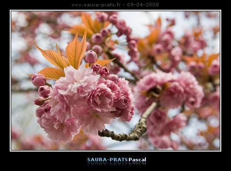 printemps001