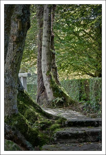 Deux marches, deux arbres et une rambarde.