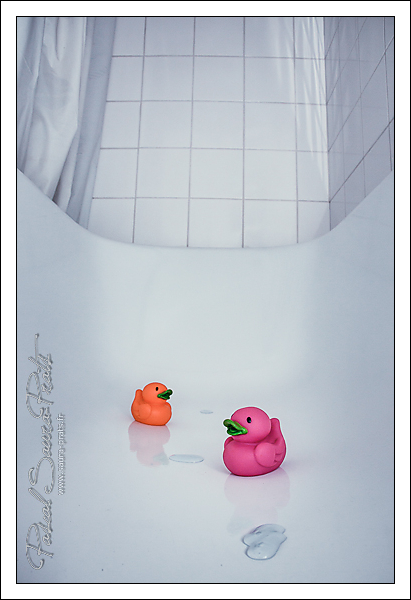 duck in the bath