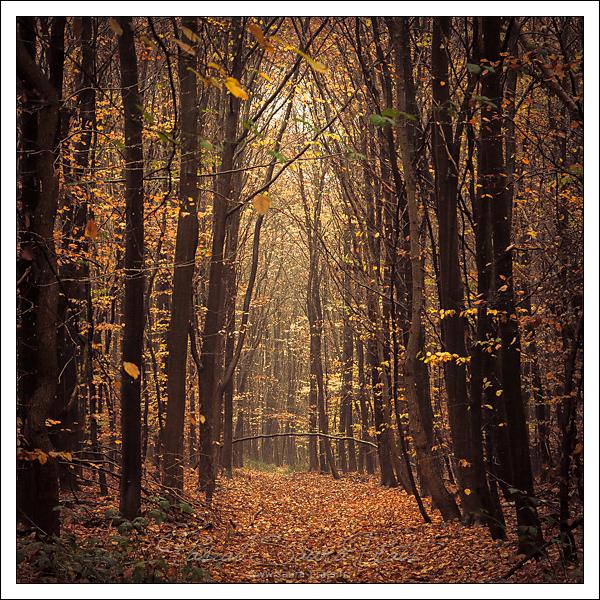 Forêt domaniale de Roumare