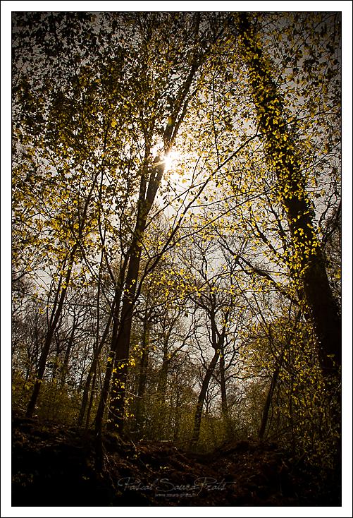 Forêt de Maulévrier-Sainte-Gertrude