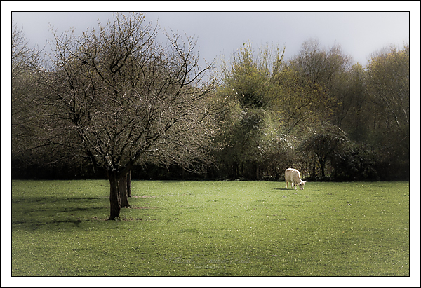 Paysage normand