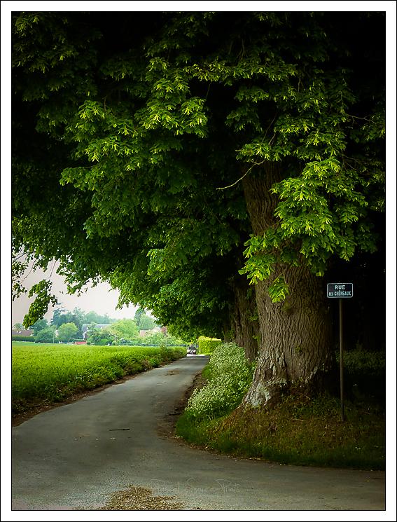 Rue des chêneaux