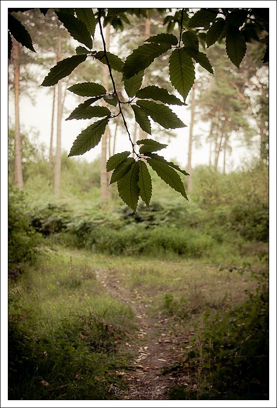 randonnée forêt domaniale de la londe rouvray