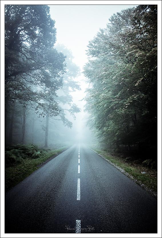Route forêt brouillard
